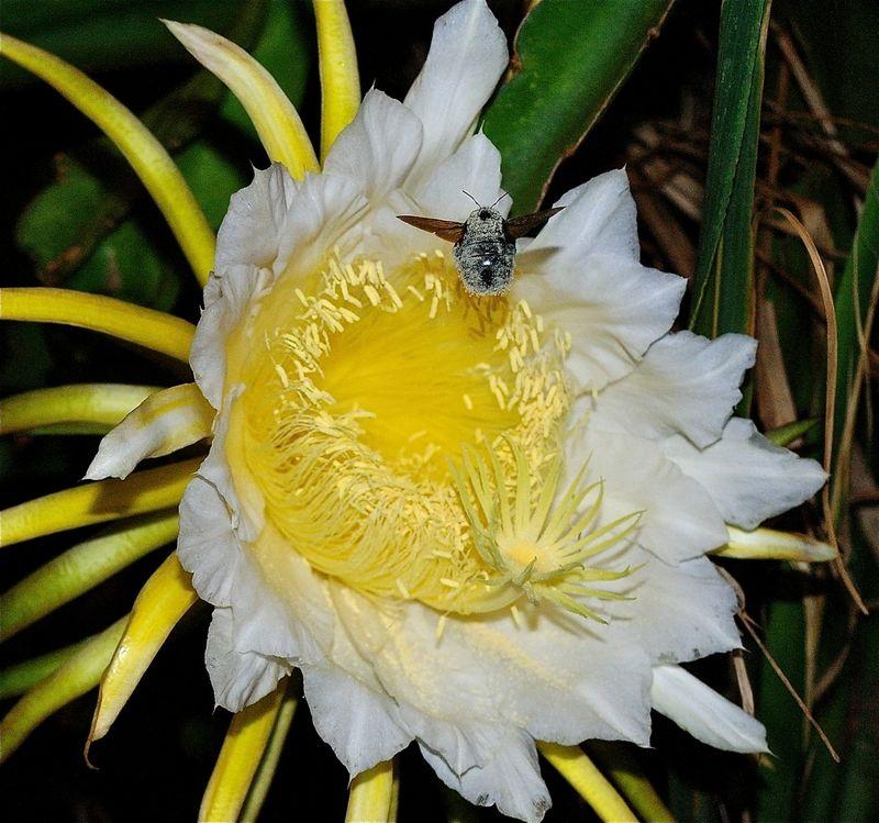 Bee + Cereus