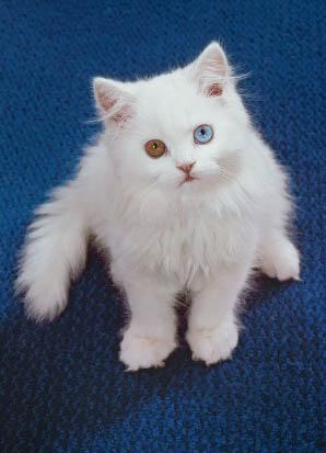 Cat C2S