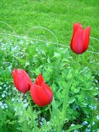 Tulipspark_2