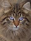 Cat_wiki_3